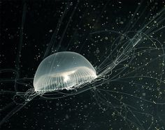 awesome photo of jellyfish