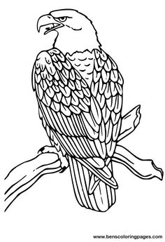 Bald Eagle coloring page.