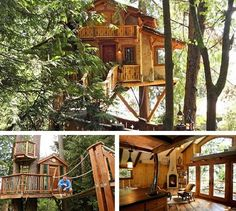 I would just live in the tree house instead of my home. 10 Tree, In The Tree, Future House, My House, House Plans With Pictures, Tree House Plans, Cool Tree Houses, Tree House Designs, Diy Holz