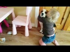 The Beagle Knocked His Sister's Bowl Off The Table And Broke It. How She Responds To Him Is Priceless... - Suggested Post
