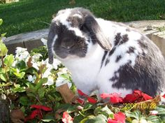 Bunny Has a Photoshoot in the Flowerbed