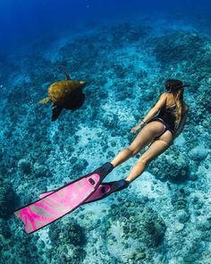 bluuespace for a daily doses of vitamins SEA ! Repost alexkyddphoto Happy turtletuesday ~ alicia_neylon swimming side Scuba diving opens a whole new world for you.