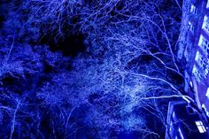 'Flashing Trees' December 2 2016  The next couple of photos were taken at the christmas market in Bremen! I spent an awesome weekend there with really good friends it was awesome blast!  #nofilter  #vlogdave #youtuber #photography #fotografie #photographer #photographyislife #nature #sky #tree #trees #bremen #bremencity #Weihnachtsmarkt #Weihnachtsmarktbremen #christmas #christmastime #decoration #christmasmarket #germany #picoftheday #beautiful #winter #wintermood #art #creative #instagood…