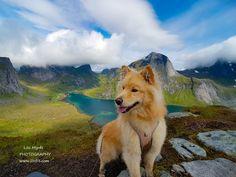 Helvetestinden ridge hike in Lofoten Lofoten, Norway, Landscapes, Hiking, Mountains, Travel, Paisajes, Walks, Scenery