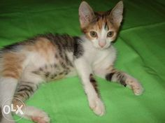 Adopt a cat ! Phone 0771 592 579