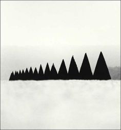 Conical Hedges (détail), Versailles, 1988, Michael Kenna