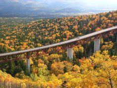 三国峠【上士幌町】 北海道に存在する国道の中では、一番高い位置にあるのがこの三国峠です。  途切れることのない樹林の中を貫く圧巻の人口建造物! この「松見大橋」を、展望台から眺めるもよし、もちろん爽快に走り抜けるもよし。