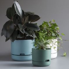 Mr Kitly x Decor Selfwatering Plant Pot 250mm | Mr Kitly