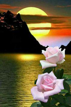 Pink rose moon behind yellow