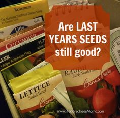 Learn how to test old seeds for viability and save them the right way. Every year my seed catalog eyes are bigger than my gardening effort and I end up purchasing more seed than I can plant Fruit Garden, Garden Seeds, Edible Garden, Garden Plants, Organic Gardening, Gardening Tips, Hydroponic Gardening, Vegetable Gardening, Seed Catalogs