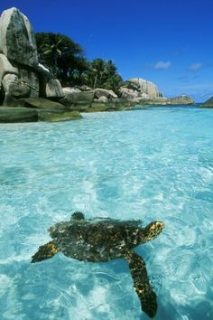 Cocos Island, Costa Rica, Mingling with Sea Turtles.