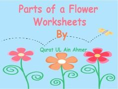 Flower: Parts of a Flower:5 worksheets.5 Answer Keys.3 fill in the blanks worksheets ( total 30 sentences).2 worksheets for label the diagram.For related topic:https://www.teacherspayteachers.com/Product/Label-the-Plant-1593953https://www.teacherspayteachers.com/Product/Seed-Plant-Worksheet-1741046Creative Commons LicenseFlower: Parts of a Flower: by Qurat Ul Ain Ahmer is licensed under a Creative Commons Attribution-NoDerivatives 4.0 International License.