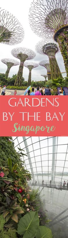 Gardens by the Bay | Singapore | Nicole Travels