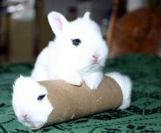 That bunny looks like a cannoli.  Repinned for the comment.