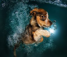 Fotógrafo registra lindas imagens de filhotes de cães nadando e brincando.