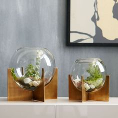 Round out your indoor garden with the modern shape of our Cross Base Terrariums. The simple globe container and antique brass-finished base provide the perfect home for succulents and small flowers.     Glass container.  Metal base in an Antique Brass finish.  Sold individually.  Made in India.  See our go-to guide on terrariums for tips.