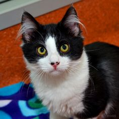 Lewis and brother Clark are available for adoption at PETCO Saratoga!