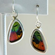 Butterfly Earrings: Vibrant Multicolored Wings » Dazzle Studios, LLC