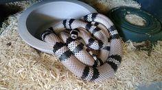 Mon Zoo, Snakes, Reptiles, Ocean Life, Dragons, Insects, Animals, Amazing, Animales