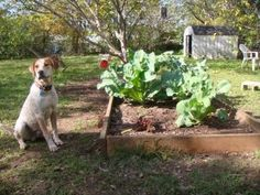 Natural dog repellant for gardens .... I sure hope one of these works cuz I think my dog is jealous of my plants... bad dog