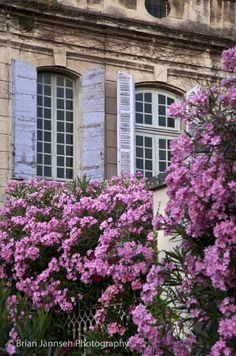 Flowers below an old villa in Saint Remy de-Provence, France. © Brian Jannsen Photography