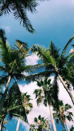 Pin by Javi Kassens ↠ on Palm trees ⇺ in 2019 Aesthetic Backgrounds, Aesthetic Iphone Wallpaper, Aesthetic Wallpapers, Summer Wallpaper, Tree Wallpaper, Phone Backgrounds, Wallpaper Backgrounds, Fred Instagram, Photo Polaroid