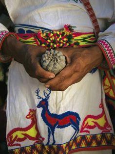 Peyote, a sacred drug?