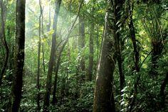 Wander the dense tropical rainforest.