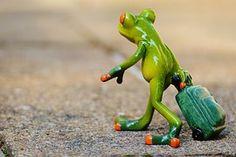 カエル, 別れ, 旅行, 荷物, ごちゃ混ぜ, 立ち去る, 休日, 移動中に