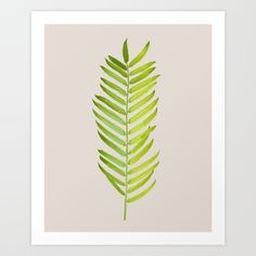 nature, photo, illustration, leaves, leaf