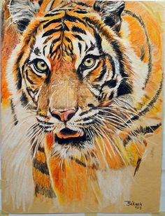 Tiger Artwork done in color pencils and pen. Took about 5hrs to finished.