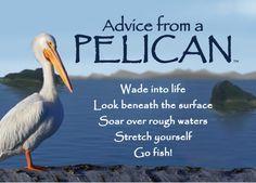 Animal Advice
