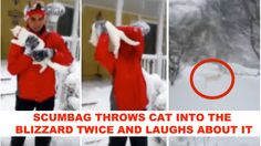 Heartless owner throws his CAT into the blizzard TWICE and laughs about it! Act Now! | YouSignAnimals.org