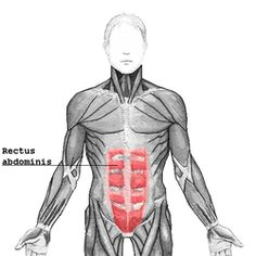 Rectus abdominis.pngOrigincrest of pubis InsertionCostal cartilage of ribs 5-7, xiphoid process of sternum Arteryinferior epigastric artery Nervesegmentally by thoraco-abdominal nerves (T7 to T11) ActionsFlexion of the lumbar spine