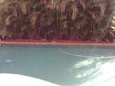 My pool again
