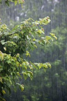 Summer rain taps at my window.... I love the rain.