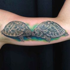 Two turtles together