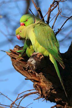 Green Animals, Animals For Kids, Animals And Pets, Baby Animals, Funny Animals, Cute Animals, Cute Birds, Pretty Birds, Beautiful Birds
