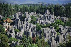 Foresta di pietra (Shilin), Cina . La foresta di pietra o Shilin è un raggruppamento di formazioni calcaree situate nella contea autonoma di Shilin Yi, provincia dello Yunnan (Cina) a circa 120 chilometri dal capoluogo Kunming. Le rocce alte sembrano uscire dalla terra come degli stalagmiti, creando così l'illusione di una foresta di pietra.