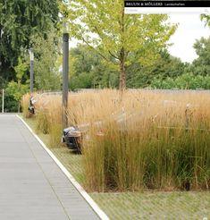 Landscape Plane, Landscape And Urbanism, Landscape Elements, Garden Landscape Design, Green Landscape, Modern Landscaping, Outdoor Landscaping, Sp City, Rain Garden