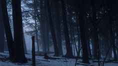 The darker side of winter's beauty - http://earth66.com/darker-winters-beauty/