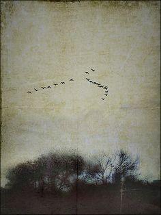 houston winter | Jack Barnosky