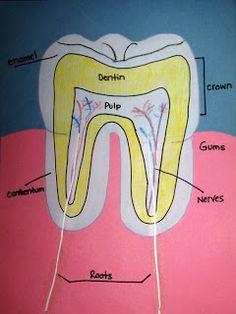 Primary Junction: Open Wide! Dental Health Unit