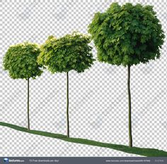 Textures.com - Trees0081 Photoshop Rendering, Photoshop Design, Photoshop Elements, Plant Images, Nature Images, Tree Psd, Tree Photoshop, Inkscape Tutorials, Garden Illustration