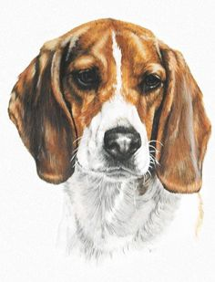 Paintings of Beagles Face - Yahoo Image Search Results #Beagle