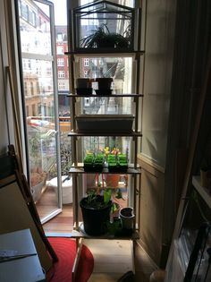 Homemade rack for seeds indoor - to be moved outside later on..