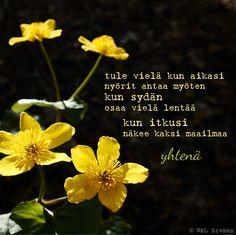 #runo #runokuva #runous #runoilija #suomeksi #valokuva #valokuvaus #kesä #kaipuu