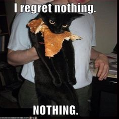 funny captions, animal memes, animal pictures with captions Animal Captions, Funny Captions, Funny Cat Memes, Funny Humor, Hilarious Jokes, Sarcasm Humor, I Love Cats, Crazy Cats, Cute Cats