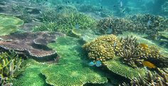 PLEASE SIGN AND SHARE THIS PETITION TO SAVE THE OCEANS!!~~~Establish a Marine Protected Area in the South China Sea