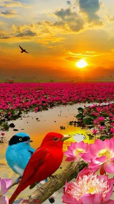 I awoke to a world of color surrounding a beautiful stream. I walked on through the beautiful land full of flowers, colorful birds, and a golden sky as the sun continued to rise. Beautiful Nature Pictures, Beautiful Sunset, Amazing Nature, Nature Photos, Beautiful Birds, Animals Beautiful, Amazing Red, Beautiful Gardens, Beautiful Landscape Wallpaper